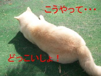 あきダイエット2