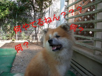 大吉あきダイエット1