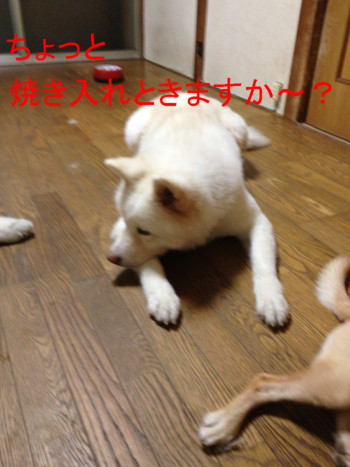 2_20120930024751.jpg