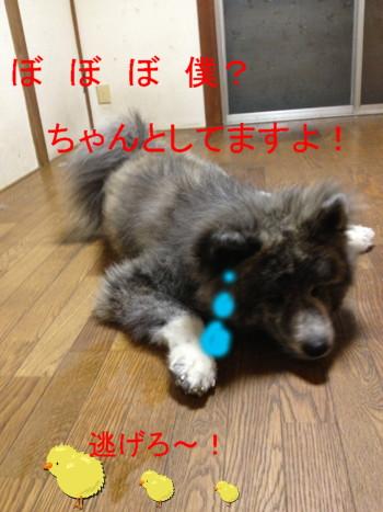 3_20120930024753.jpg