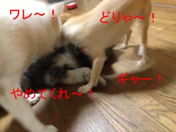 4_20120930024750.jpg