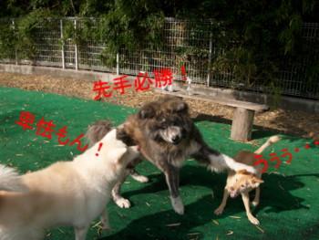 4_20121124145808.jpg