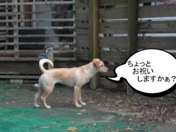6_20121124145806.jpg