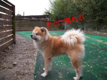 7_20121124150048.jpg
