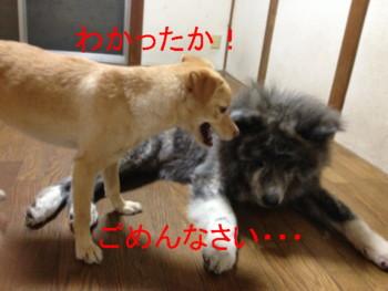 9_20120930024827.jpg