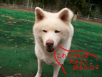 9_20121124150047.jpg