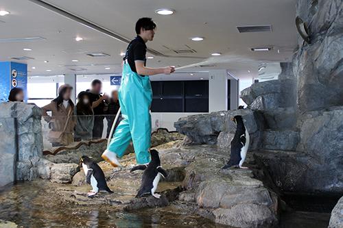 ペンギン03