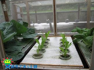 水耕菜園10・31