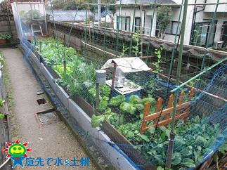 12・5菜園(土耕)