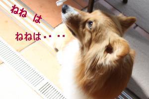 IMG_1050_convert_20120610220047-1.jpg