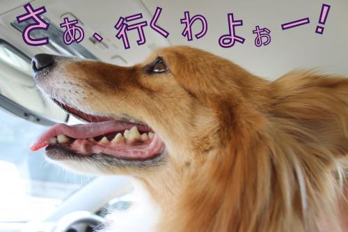 IMG_1891_convert_20121006094730-2.jpg
