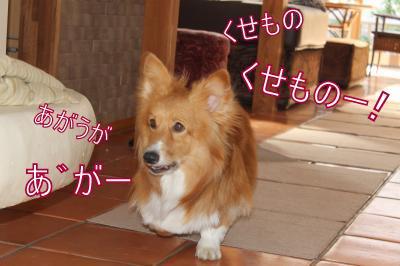 IMG_3734_convert_20121015111040-1.jpg