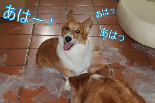 IMG_4217_convert_20121020114514-1.jpg