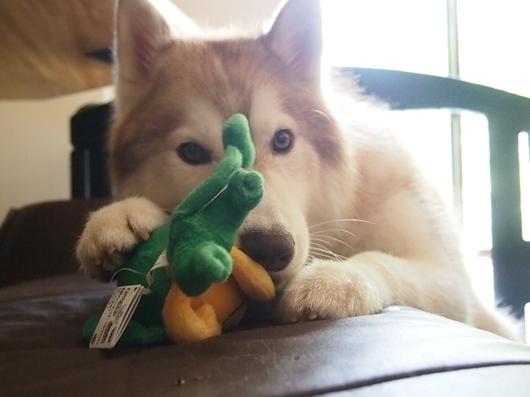 れらおもちゃ