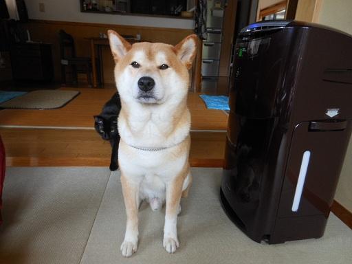 kyoumo1