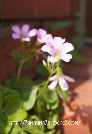 花とレンガ