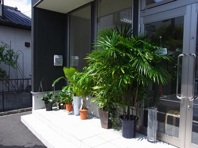 観葉植物01