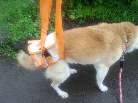 犬用の補助ハーネス