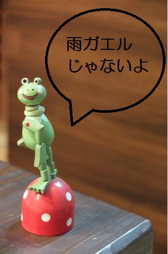 雨ガエルではないカエルさん