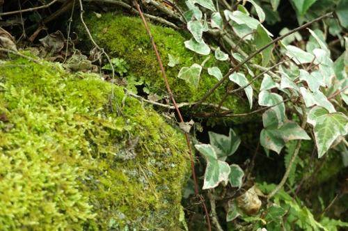 那珂川の植物。
