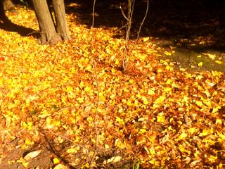12月の枯れ落ち葉3 by占いとか魔術とか所蔵画像