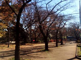 枯れた東京の桜1 by占いとか魔術とか所蔵画像
