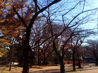 枯れた東京の桜2 by占いとか魔術とか所蔵画像