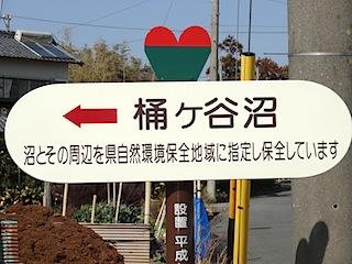 0309菜の花8
