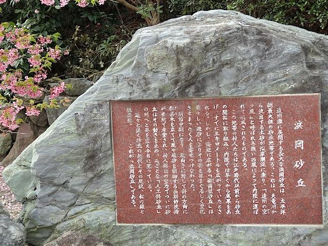 0315河津桜1