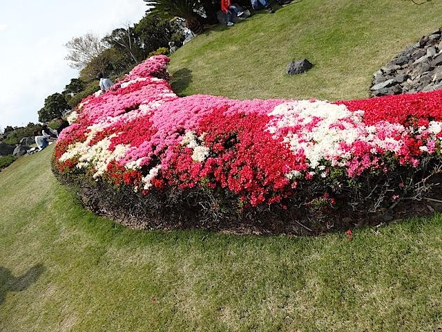 0414吉田公園4