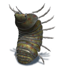 ユトリダンゴムシ