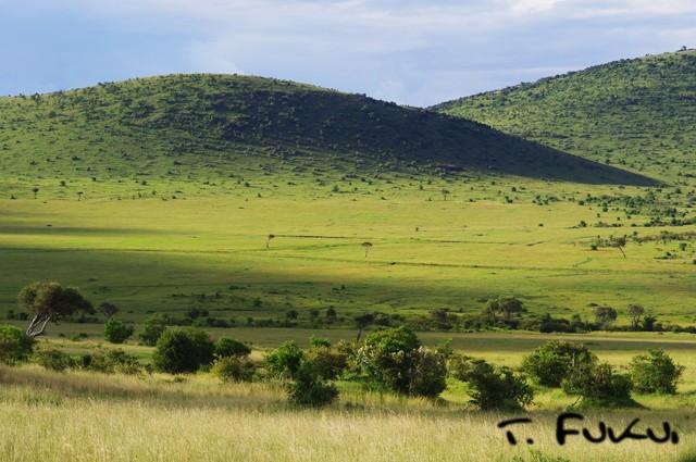 マサイマラの草原
