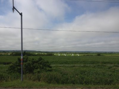 空港近くの草原