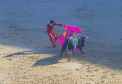 かずきち闘牛