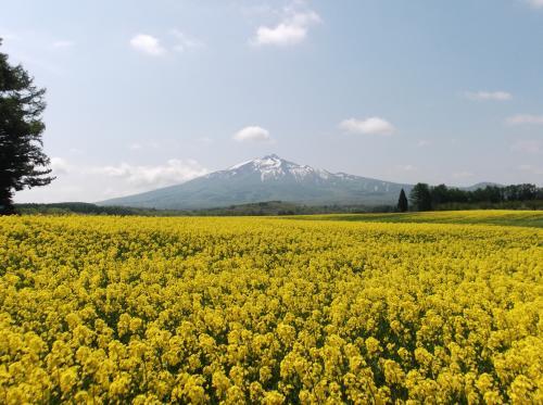 2012.5.19菜の花