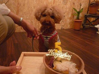 クッキーくん/Birthday Boy