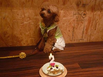 CoCoくん/Birthday Boy