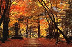 京都・栂尾山高山寺