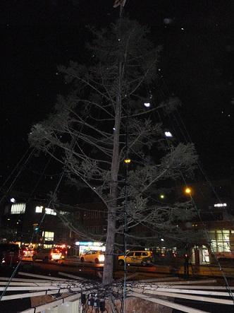 13日のツリー