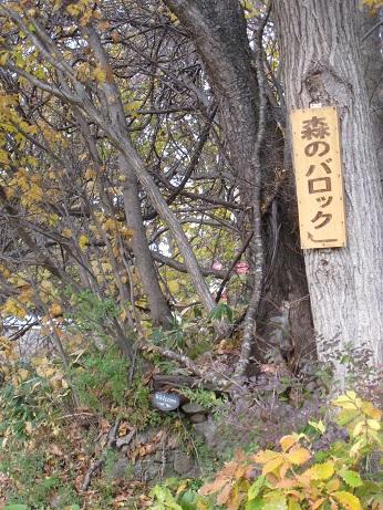 森のバロック8