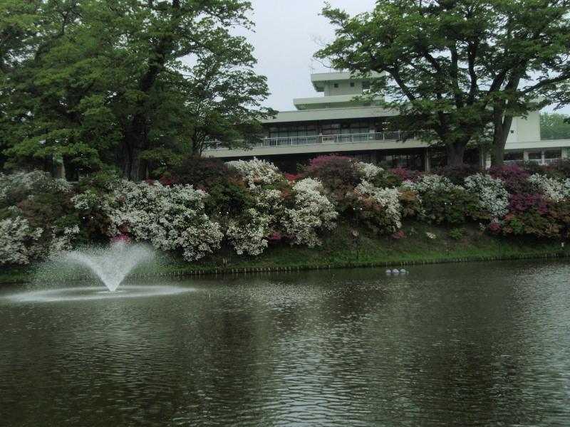 P1010378 千秋公園の堀(5月)