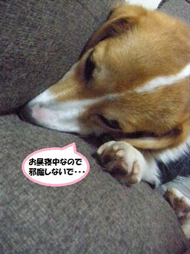 ryou120703-1.jpg