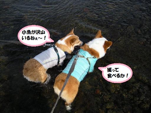 toraryou120716-1.jpg
