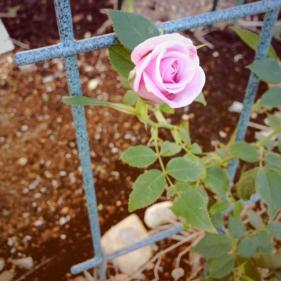 image_20130601091719.jpg