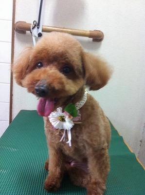 堺市三国ヶ丘トリミングaloalo 197