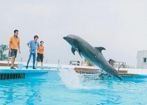 フジのジャンプ
