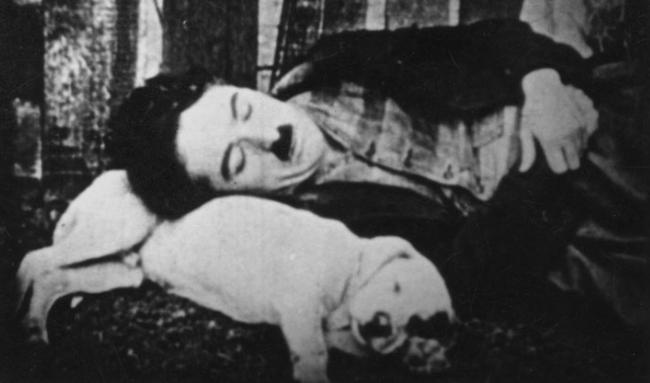 犬を枕にするチャーリー