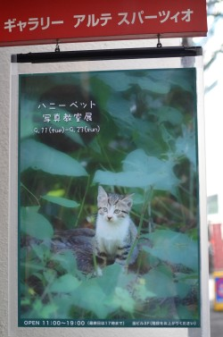 DSC_0378 (ブログ用)