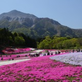 秩父の芝桜1