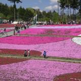 秩父の芝桜2